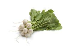 Mini white turnips Stock Images