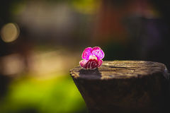 Mini world. Cute flower in the nature Royalty Free Stock Image