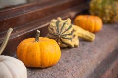 Mini zucche in decorazione, nella via Fotografia Stock