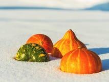 4 mini zucche nella neve un giorno soleggiato Fotografia Stock