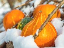 4 mini zucche nella neve un giorno soleggiato Fotografie Stock