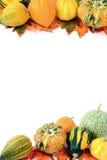 Mini zucche su fondo bianco isolato Halloween Fotografie Stock Libere da Diritti