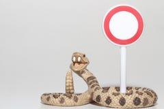 Miniatur einer Klapperschlange mit einem Zugang verweigerte Zeichen Stockfotografie