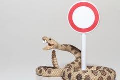 Miniatur einer Klapperschlange mit einem Zugang verweigerte Zeichen Lizenzfreie Stockfotos