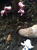 Miniatura animal Foto de Stock Royalty Free
