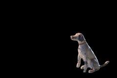 Miniatura antiga minúscula do cão da ligação, contra o preto com espaço da cópia Fotografia de Stock Royalty Free