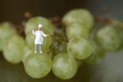 Miniatura de um cozinheiro chefe com uvas Fotos de Stock Royalty Free