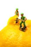 Miniaturarbeitskräfte, die Mandarinen-Satsuma abziehen stockfoto