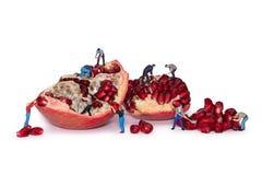 Miniaturarbeitskräfte nehmen die Samen des Granatapfels heraus Bruchgranatäpfel Stockfotos
