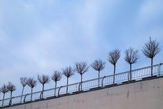 Miniaturbäume in den großen hölzernen Blumentöpfen als Stadtstraßendekoration in der Winterzeit Lizenzfreie Stockfotos