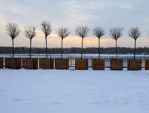 Miniaturbäume in den großen hölzernen Blumentöpfen als Stadtstraßendekoration in der Winterzeit Stockbild