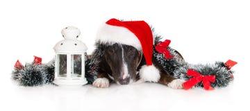 Miniaturbullterrierhund, der mit Weihnachtsdekorationen aufwirft lizenzfreies stockbild