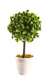 Miniature artificial tree Royalty Free Stock Photography