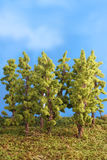 Miniature artificial trees Royalty Free Stock Photography