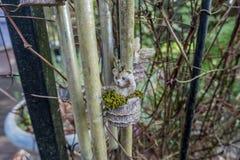 Miniature Bear Planter Stock Photography