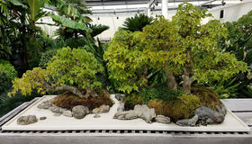 Miniature Bonsai garden Stock Image