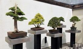 Miniature Bonsai trees exhibit Royalty Free Stock Photo