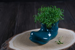 Miniature boot shoe with fresh cress on a wooden background.Spring is coming Royalty Free Stock Photography