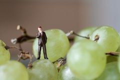 Miniature of a businessman on the grapes Royalty Free Stock Images