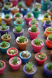 Miniature Cactus in colorful planters Stock Images