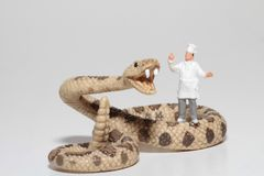Miniature of a cook with a giant snake Royalty Free Stock Photography