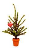 Miniature Christmas Tree Stock Photos
