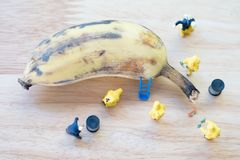 Miniature crime scene investigator with rotten bananas. Concept of order to make banana best possible stock photography