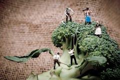 Miniature farmers crew harvesting broccoli crowns Stock Photography