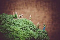 Miniature farmers harvesting broccoli. Color tone tuned macro photo Stock Images