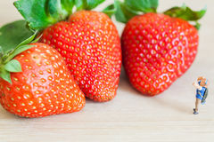 Miniature figure (explorer) with ripe red strawberries on wooden table Stock Photos