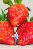 Miniature figure with ripe red strawberries on wooden table Royalty Free Stock Photo