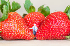 Miniature figure with ripe red strawberries on wooden table Royalty Free Stock Photos