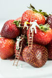 Miniature Figures Painting Strawberries Royalty Free Stock Photography