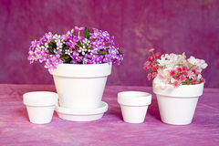 Miniature Flower Pots and Flowers Stock Images