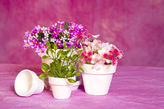 Miniature Flower Pots and Flowers Royalty Free Stock Images