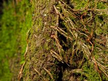 Miniature forest on a tree with moss and vines stock photography