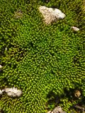 Miniature Forrest. Moss and rocks Royalty Free Stock Photos