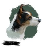 Miniature fox terrier hunting and working dog digital art illustration. Canine portrait, profile closeup of lightweight. Small and fine puppy. Animal mammal royalty free illustration