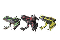 Miniature Frogs Stock Images