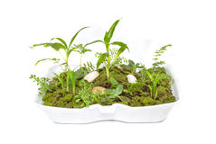 Miniature garden in foam pack, isolated on white background Royalty Free Stock Images