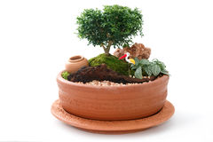 Miniature Garden in a Pot Stock Photos