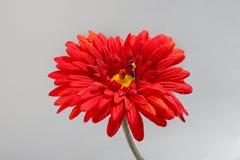 Miniature gardener watering flowers Stock Image