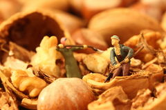 Miniature gardeners nuts Stock Image