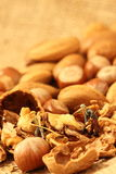 Miniature gardeners nuts Stock Images
