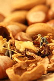Miniature gardeners nuts Stock Photography