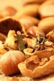 Miniature gardeners nuts Stock Photo