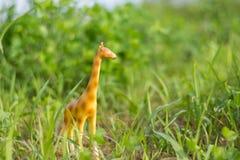 Miniature giraffe figurine in grass like a mini safari. royalty free stock images