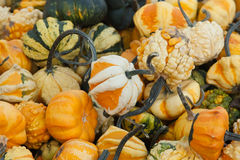 Miniature Gourds Royalty Free Stock Images