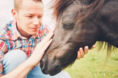 Miniature horses on the pasture. Young farmer caress mare of the miniature horses on the pasture stock photography