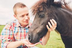 Miniature horses on the pasture. Young farmer caress mare of the miniature horses on the pasture royalty free stock photo